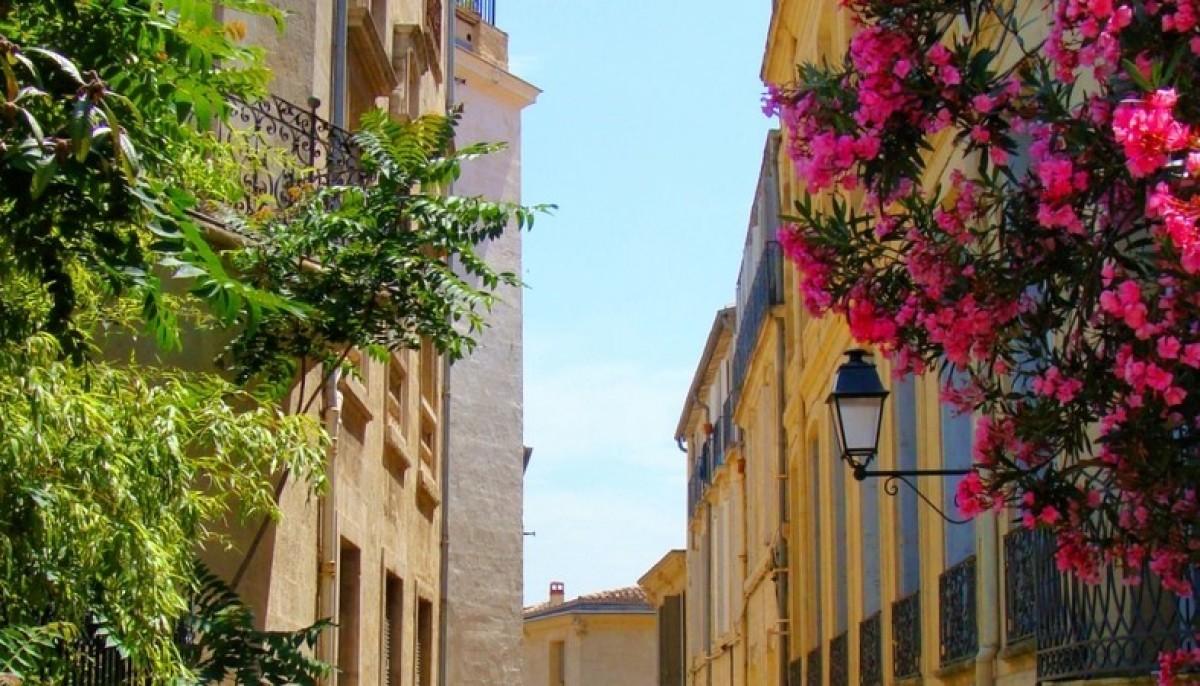 Avec le permis de végétaliser, Montpellier devrait encore gagner en couleurs!