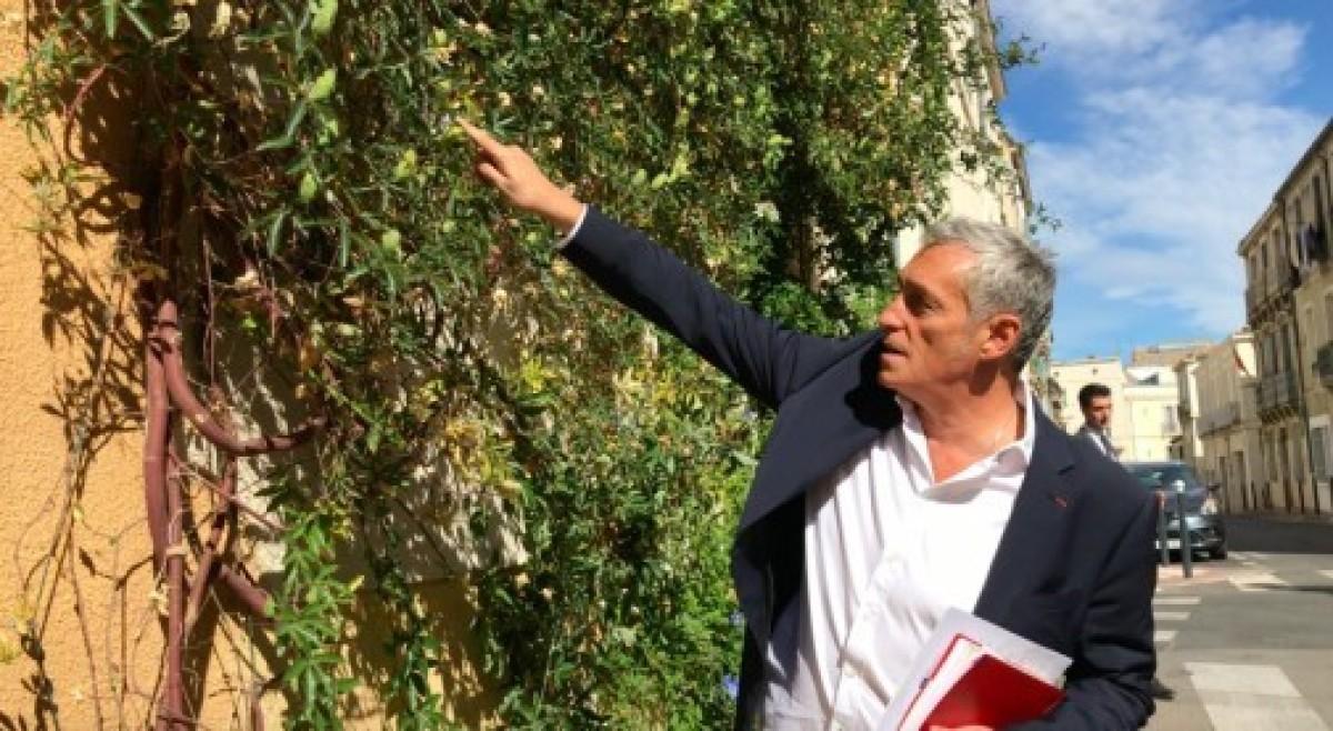 Philippe Saureln le maire de Montpellier, veut développer la végétalisation des rues de sa ville