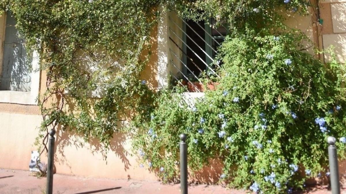 Si tout se passe comme prévu, d'ici quelques années, les façades de Montpellier devraient fleurir de toutes parts