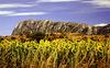 Culture montpelliéraine - vue sur le Pic Saint-Loup